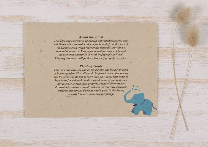 Plantable New Baby Boy Card - Back