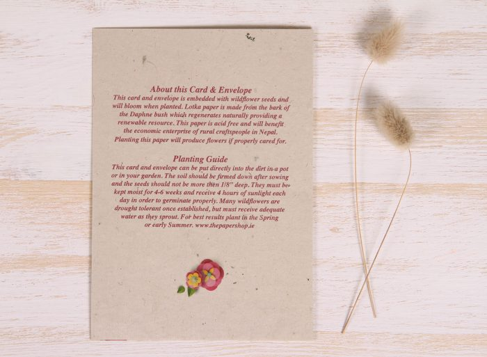 Plantable Easter Card - Vibrant Eggs - Back