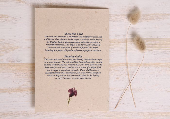 Plantable Thinking of You Card - Wildflowers - Back