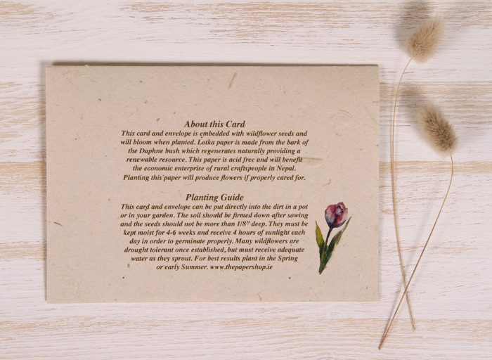 Plantable Greeting Card - Any Occasion - Tulips - Back